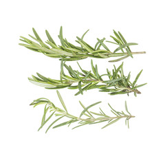 Organic rosemary spice leaves ingredient color and size