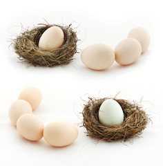 Composition with eggs and the nest, isolated on white
