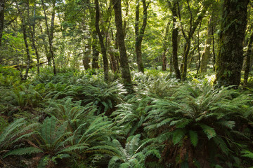 Forest ferns cover the rainforest
