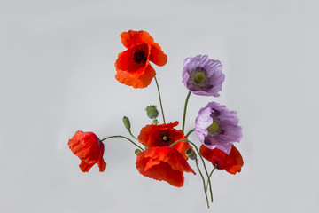 Foto op Canvas Poppy Pink and red poppy flowers
