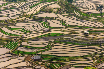 Printed roller blinds Rice fields Terraced rice field