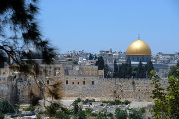 黄金のモスクと松 Old City of Jerusalem and its Walls
