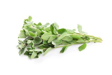 Fresh garden oregano herb
