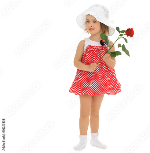 207d8d95b9b9e Cute little girl in a short red dress and white summer wide-brimmed Panama,  holding a rose flower - Isolated on white background