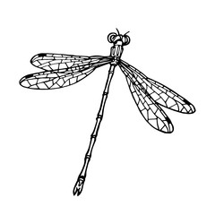illustration with dragonflies
