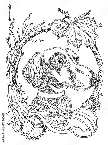 coloring page with dachshund and autumn elements stock photo and royalty free images on