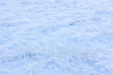 Grassland field at winter