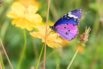 colorful butterfly on the yellow flower