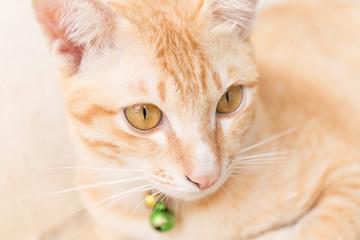 Orange little Cat