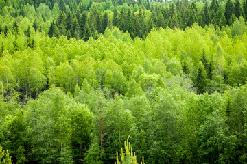 Dense mixed forest  background