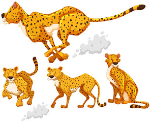 Cheetah in four different actions