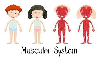 Muscular system of boy and girl