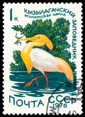 Stamp printed in Russia shows bird Cattle Egret