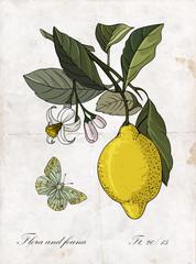 Vector hand drawing lemon branch.Botanical  illustration.