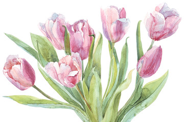 Tulips bouquet watercolor illustration