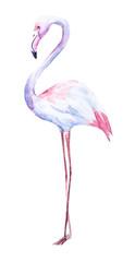 Nice watercolor flamingo