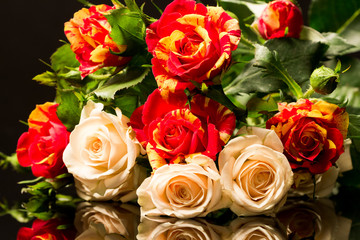 Colorful, beautiful, delicate roses with details and reflexions