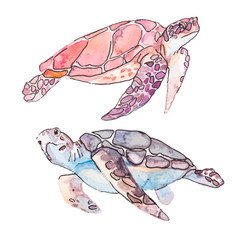 Sea turtles. Ocean vector.