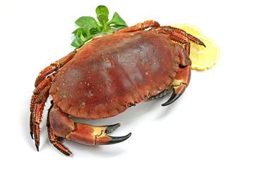 crabe 09022016