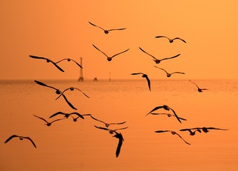 Segulls flying in the golden sky by the sea