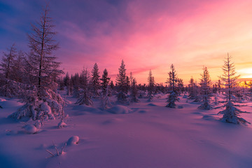 Winter landscape with forest, clouds on the blue sky and sun