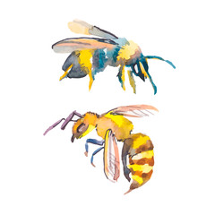 Bee isolated on white background. Watercolor. Vector. Wasp.