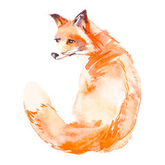 Fox isolated on white background. Watercolor. Vector.
