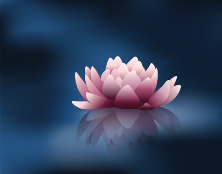 Water lily flower with reflection. Vector