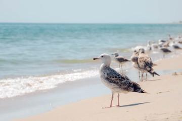 Deagulls on the coast