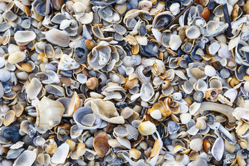 seashells on the beach at Amelia Island Florida