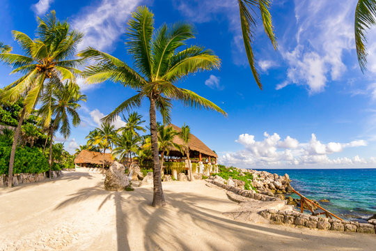 A wonderful  relaxing vacation on beach in tropical Mexico. Seascape with palm trees.