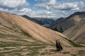 Lonely dog on the top of the ridge. Omulyovka midlands. Magadan Region. Russia.