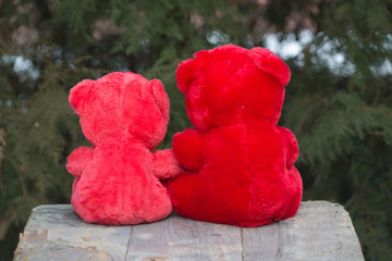 red teddy bear on Valentine's Day