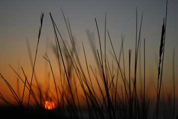 Reed sunset