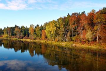 Autumn forest near water