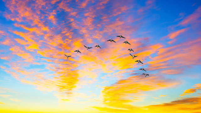 Ducks flying during a sunset