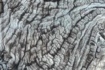 Printed kitchen splashbacks Textures bark of tree texture
