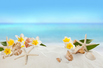 Printed roller blinds Plumeria shells on sandy beach, Summer concept