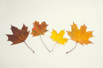 Multi-colored leaves. Vintage paper background. Autumnal leaves. Retro style.