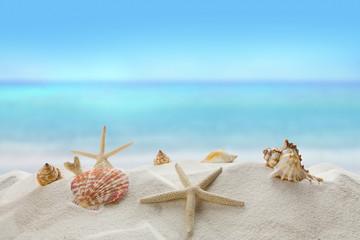 shells on sandy beach, Summer concept