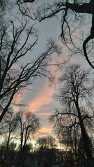 ombres d'arbres ciel coloré