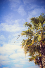 Nice palm trees in the blue sunny sky
