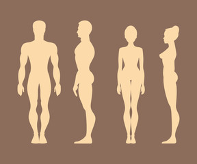 Silhouettes of men and women. Anatomy. Vector Illustration