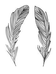Black feathers on white background. Hand-drawn illustration