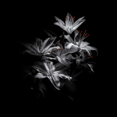 a bouquet of lilies on a black background