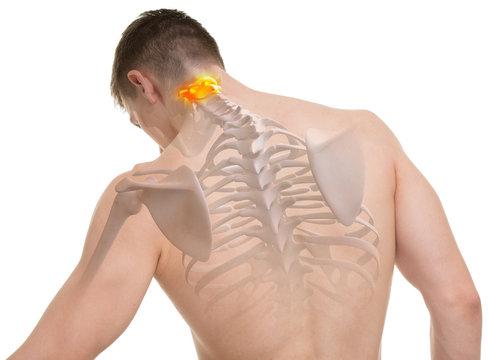 Atlas C1, C2 Spine Anatomy isolated on white