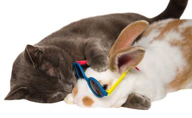 Gatto bacia un piccolo coniglietto con gli occhiali da sole