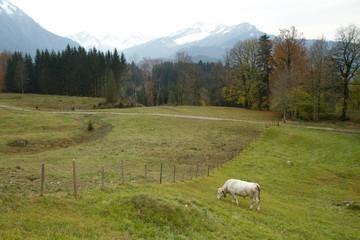 Kuhweide Oberstdorf