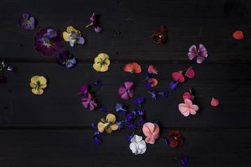 Edible flowers on dark background