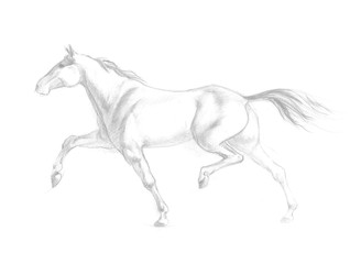 Running horse illustration